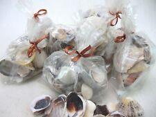 Sea Shells 15 x 150 gram Gift bag ,Decorative, Crafts , Natural ,free P&P