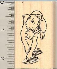 Pitbull Terrier Dog rubber stamp G10712 WM