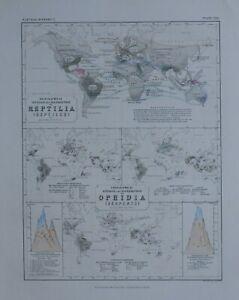 1850 HAND COLOURED MAP WORLD REPTILES VENOM SERPENTS PERPENDICULAR DISTRIBUTION