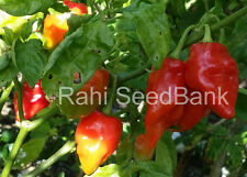 Trinidad Red Chilli - A Rare Chilli from the Village of Trinidad - 10 Seeds