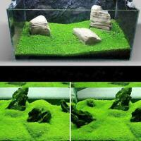 1000 stücke Aquarium Grassamen Wasser Wasser Home Aquarium Pflanze Decor T6 J4O9