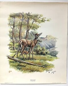 Signed Lowell Davis Lithograph 1971 DOWN WIND White Tail Deer Art Print 19x23