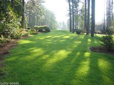 Zenith Zoysia Grass Seed 100% Pure - 1/4 Lb. (Plants 250 Sq.ft.)