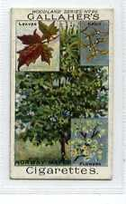 (Jc1929-100)  GALLAHERS,WOODLAND TREES,NORWAY MAPLE,1912#96