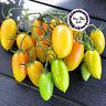 NEU Rispentomate ORANGE DREAM Tomatensamen 10 Samen sehr süss ertragreich gesund
