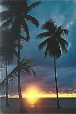 Florida Sunset   Walking On The Beach by The Palm Trees   FL  Chrome  Postcard