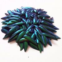 300 PCS Green Natural Jewelry Craft Real Design Insect Elytra Jewel Beetle Wing