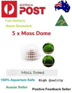 5 x Moss Dome Cultivation Nature Aquarium Aquascape Aquatic Plant