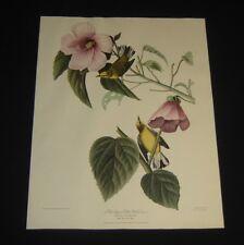 BLUE WINGED YELLOW WARBLER (Dacnis Solitaria) Audubon 1940s HAVELL Print 18x14