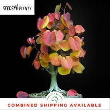 The Katsura Tree - Cercidiphyllum japonica (250 Bonsai Seeds)