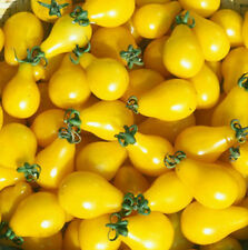FD1425 Yellow Tomato Seed vegetable Fruit Seed Healthy Green Food 1 pack 30 Seed