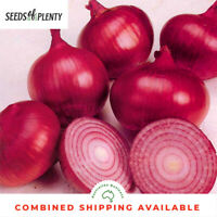 ONION - Red Burgandy (400 Seeds)