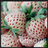 Pineberry Balcony 500 Pcs Seeds Potted Garden Pineberry White Berries NEW Bonsai