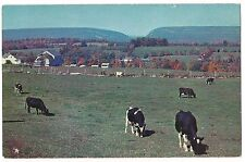 COWS Pastoral Scene New Jersey Pocono Mountains Pennsylvania Postcard PA 1963