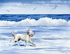 Labradoodle at the Beach Watercolor Art Print by Artist Dj Rogers