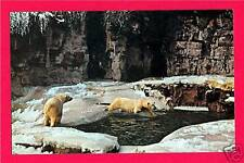 Old Polar Bear Dive Forest Park Zoo St Louis Post Card
