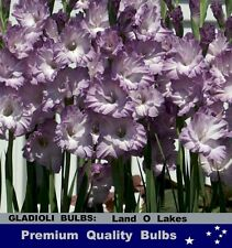 FLOWER BULBS - GLADIOLI - Land O Lakes 10 Bulbs