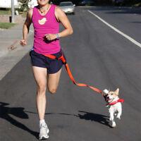 Laisse pour chien mains libres, de course, absorbant les chocs, chien-courrir