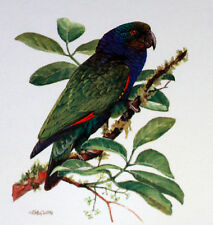 Dominica WWF Birds of the Caribbean ENVELOPPE  Premier Jour 1°  FDC  828