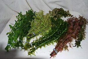 25 Bunched &; Weighted Live Aquarium Plants - Collection of Aquatic Plants fo...