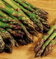 Gemüse Spargel Mary Washington 250 Samen
