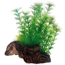 Hobby Flora Root 3s Plante pour Aquariophilie 17 cm