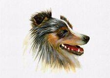 Sheltie Dog Acrylic Painting Signed Limited Edition A4 Print Wildlife Gift