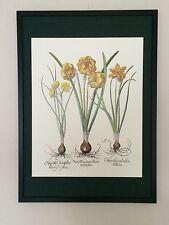 Besler Wall art - 50x70cm, vintage botanical wall art, 80's flower prints