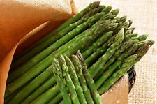 100Pcs Asparagus Seeds Organic Heirloom Rare Vegetable Seeds Perennial Garden