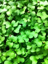 2 Oz Certified Organic Broccoli Vegetable Seeds - Micro Greens, Sprouts, Garden
