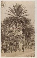 Sud Da La Francia Hyères ? Foto Primitive Albume D'Uovo Vintage Ca 1865