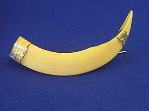 Hand-made 1890s-1900s Antique 9ct Gold Capped Australian Wild Boar Tusk Brooch