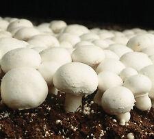 White Button Mushroom Spore Print - Grow your own mushrooms