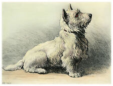 WEST HIGHLAND WHITE WESTIE DOG FINE ART ENGRAVING PRINT by Herbert Dicksee