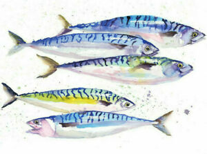 Limited Print of HOLY MACKEREL watercolour by HELEN APRIL ROSE   471