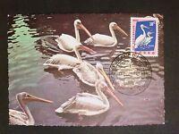 RUANDA MK 1963 VÖGEL PELIKAN BIRD BIRDS MAXIMUMKARTE MAXIMUM CARD MC CM c8106