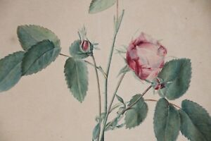 OLD MASTER Watercolor - STILL LIFE WITH PINK ROSEBUDS - FLOWERS - 19th Century