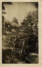 PHOTO ANCIENNE - VINTAGE SNAPSHOT - MONT REVARD SAVOIE SKI SKIEUR SPORT 1927  3