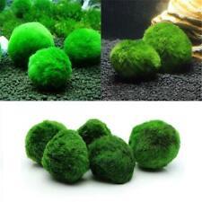 Marimo Moss Ball Filter Live Aquarium Aquatic Green Plant Fish Tank Decor 4cm