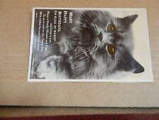 Postcard Animals Cat Many Happy Birthdays posted 1928 xc4