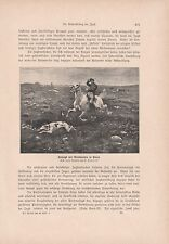 Chase on horses with Greyhounds in Poland Hunting Dog Print from 1906