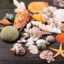 Mixed Sea Shells Assorted Natural Conch Aquarium Ornament DIY Landscape Decor