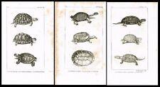 Tortoises, Geometric, Greek, Round, 3 Antique Steel Engravings, Buffon 1831
