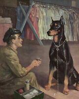 Antique DOBERMAN Print Wesley Dennis Doberman Dog Illustration 3824 A