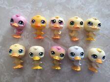 Littlest Pet Shop Duck #150 108 51 1769 1196 1002 199 247 1374 825 Easter Lot