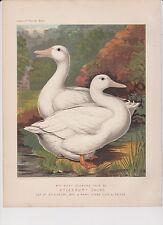 Ludlow Original Poultry Lithograph 1880