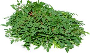 Fresh Moringa Leaves - oleifera  Leaves -  Pure Miracle Harvest Fresh Leaves