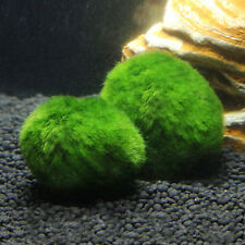 Marimo Moss Balls Live Aquarium Plant Algae Fish Shrimp Tank Ornament 3-5cm