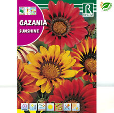 120 Graines-Vivace Gazania Splendens Sunshine Mix-Env