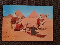 Arab Camelriders in Front of the Pyramids, Giza - Vintage Postcard
